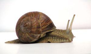 slow-opencart-speed
