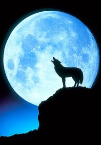 Wolf howling full moon